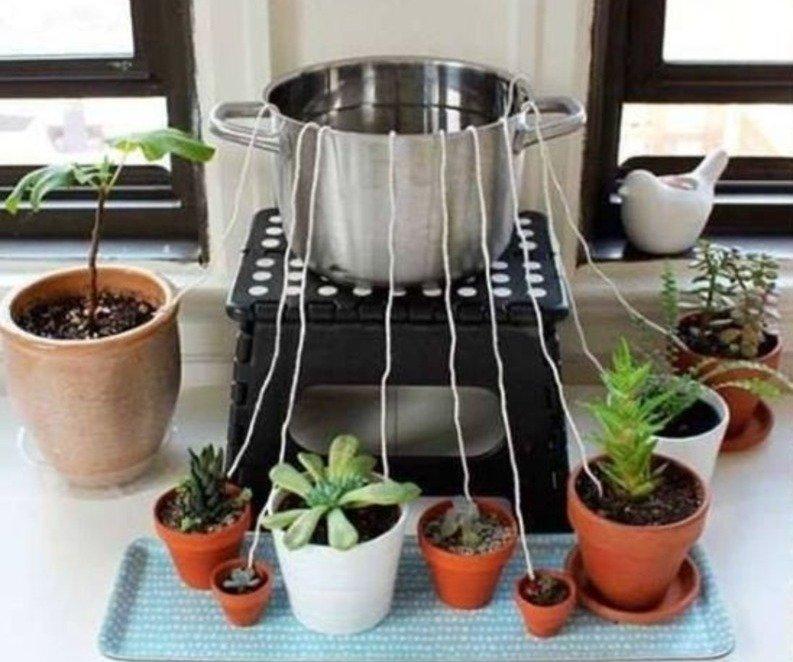 ვრწყავთ მცენარეებს მივლინების დროს